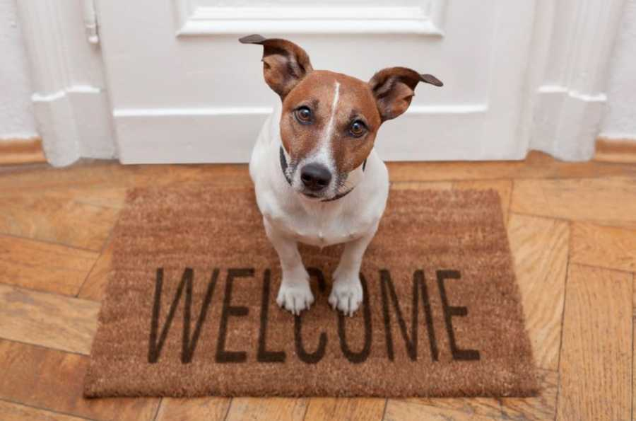 The Doorbell Problem: How to Stop Your Dog from Barking
