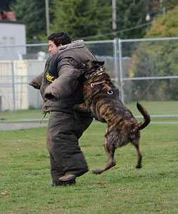 personal-canine-protection-trainer-