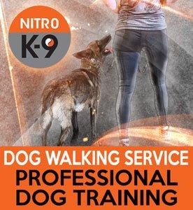 Nitro K9 Dog Walking Service Professional Dog Training