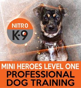 Nitro K9 Mini Heroes Level One Professional Dog Training