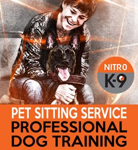 Nitro K9 Pet Sitting Service Professional Dog Training